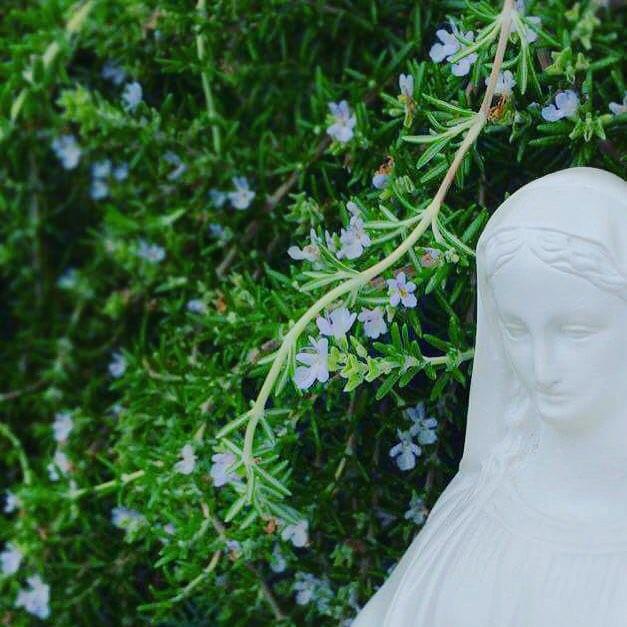 8/15聖母マリア被昇天の祝日