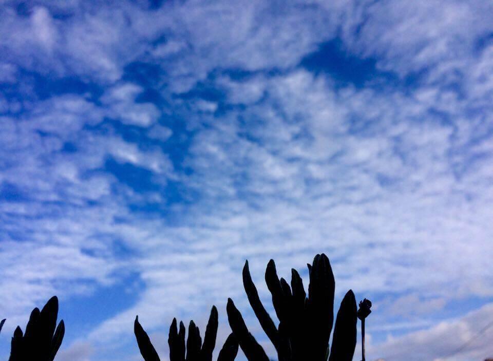 nidの空2017.1.2_ラベンダーと眺める空