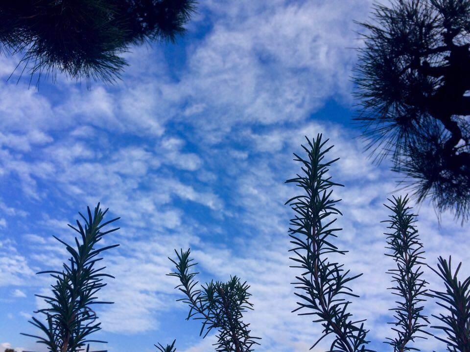 nidの空2017.1.2_ローズマリーと眺める空