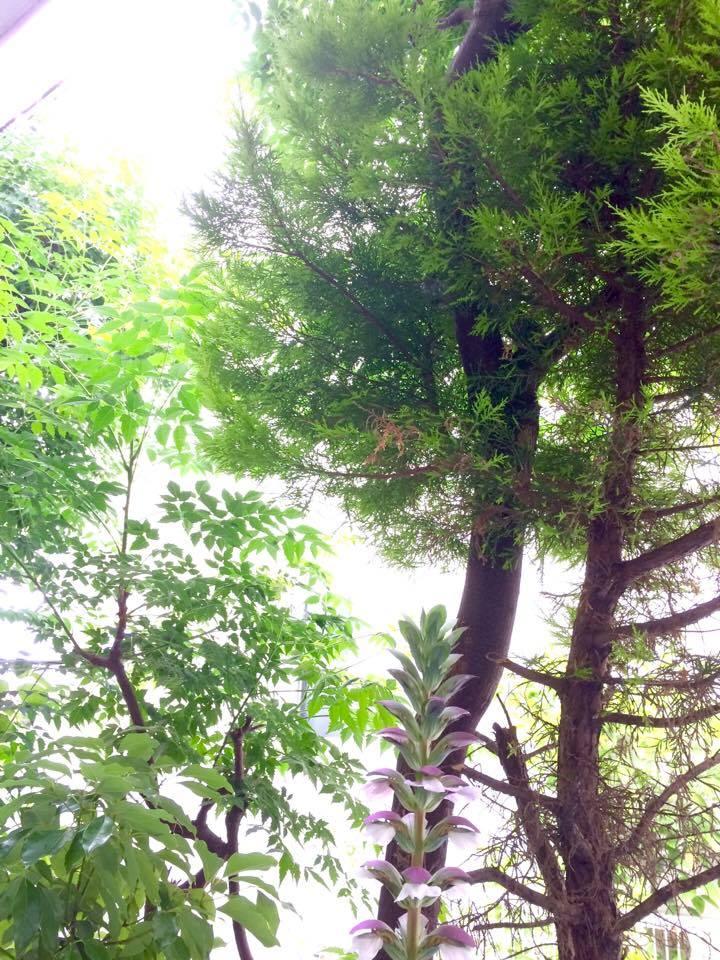 nidの森