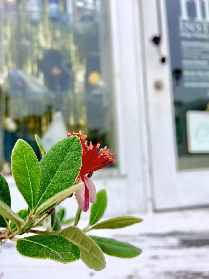 nidの花達13Jun 08 2019