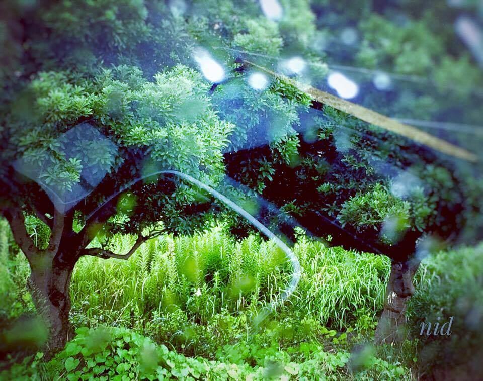 雨のドライブ温泉