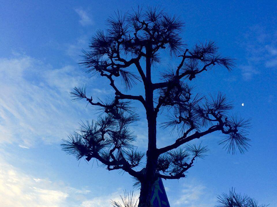 松と朝の空