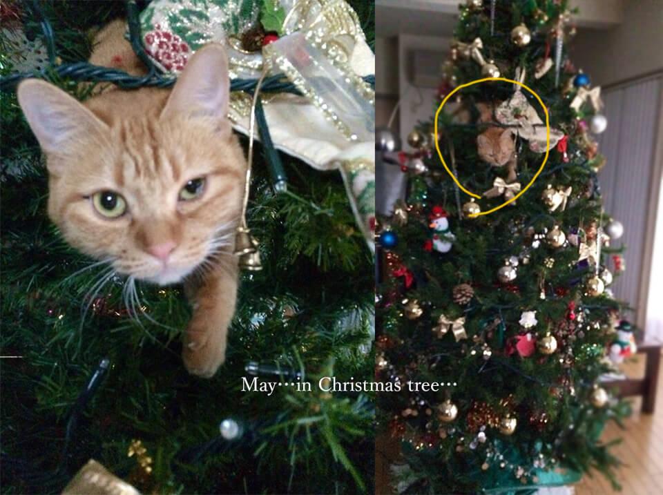 クリスマスツリーのメイ