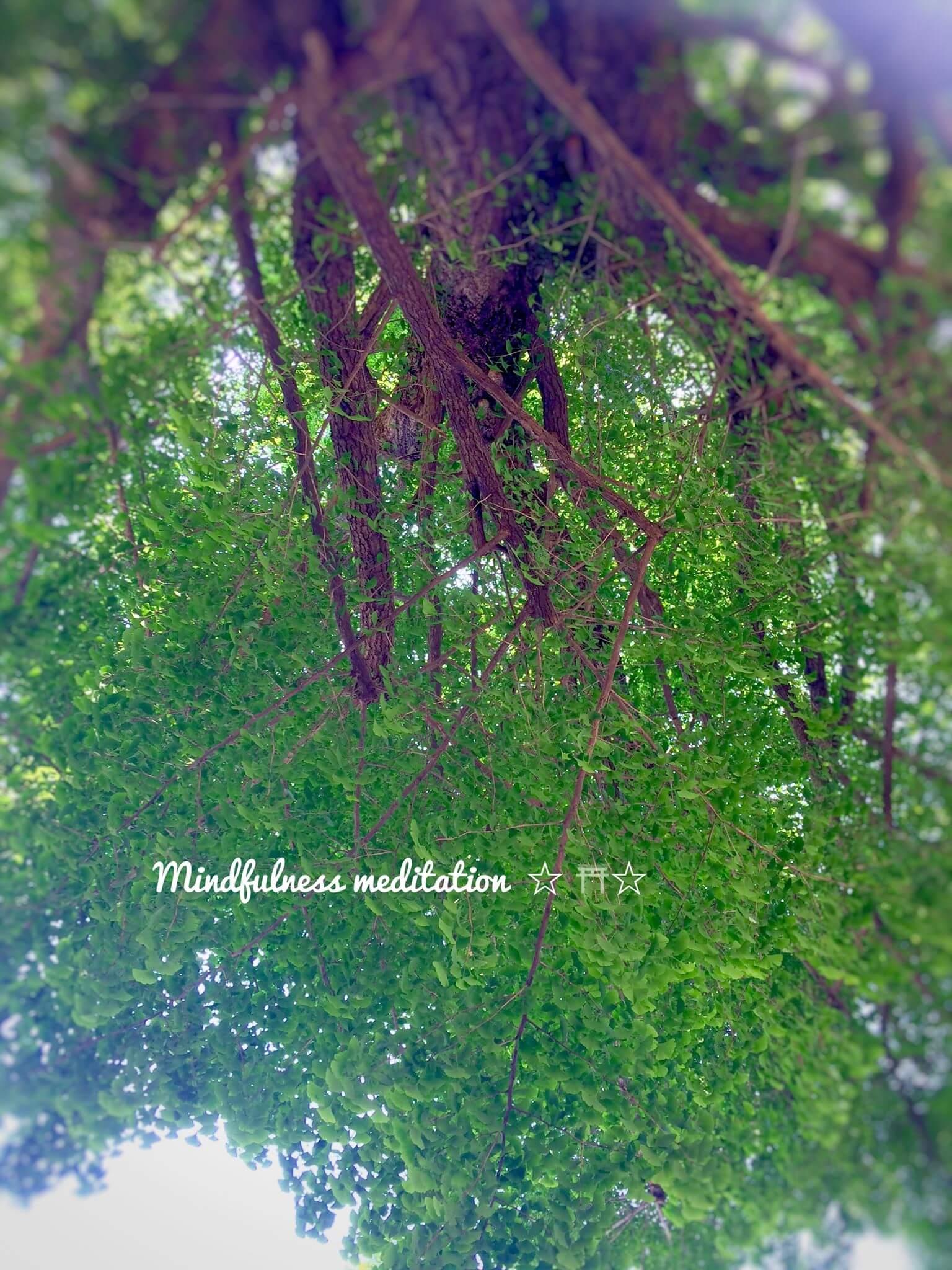 鳩の森神社の神木