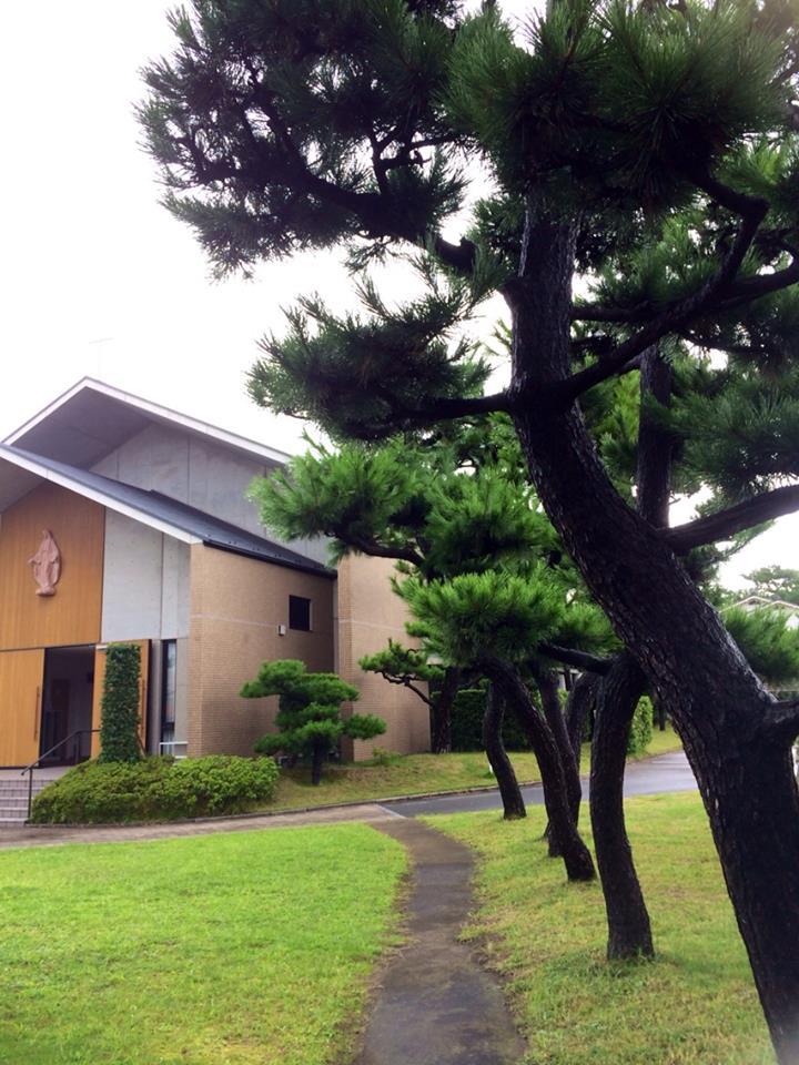 金曜日の朝ミサ 松の木の短い小道