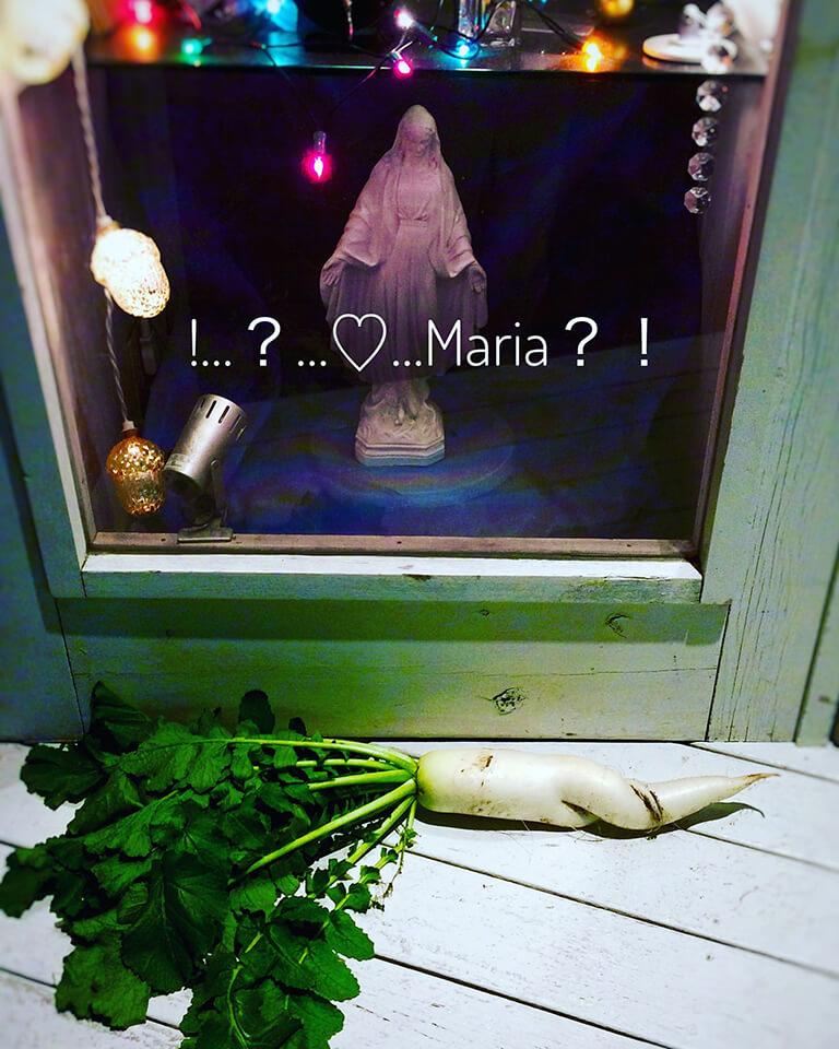 マリア様の大根