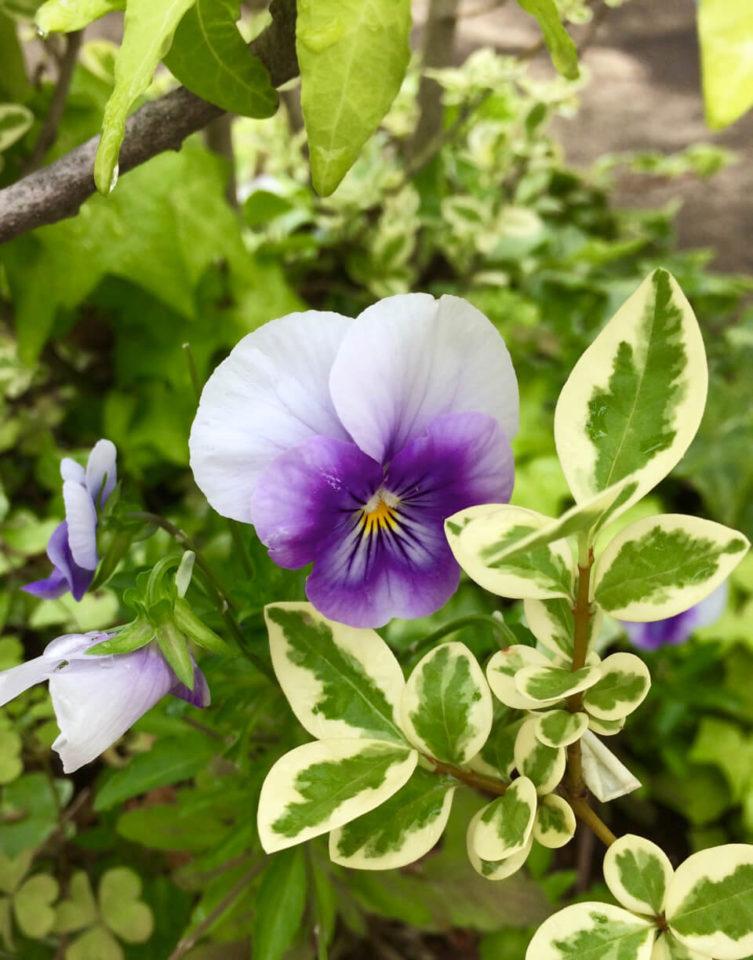 nidの花達15Jun 08 2019