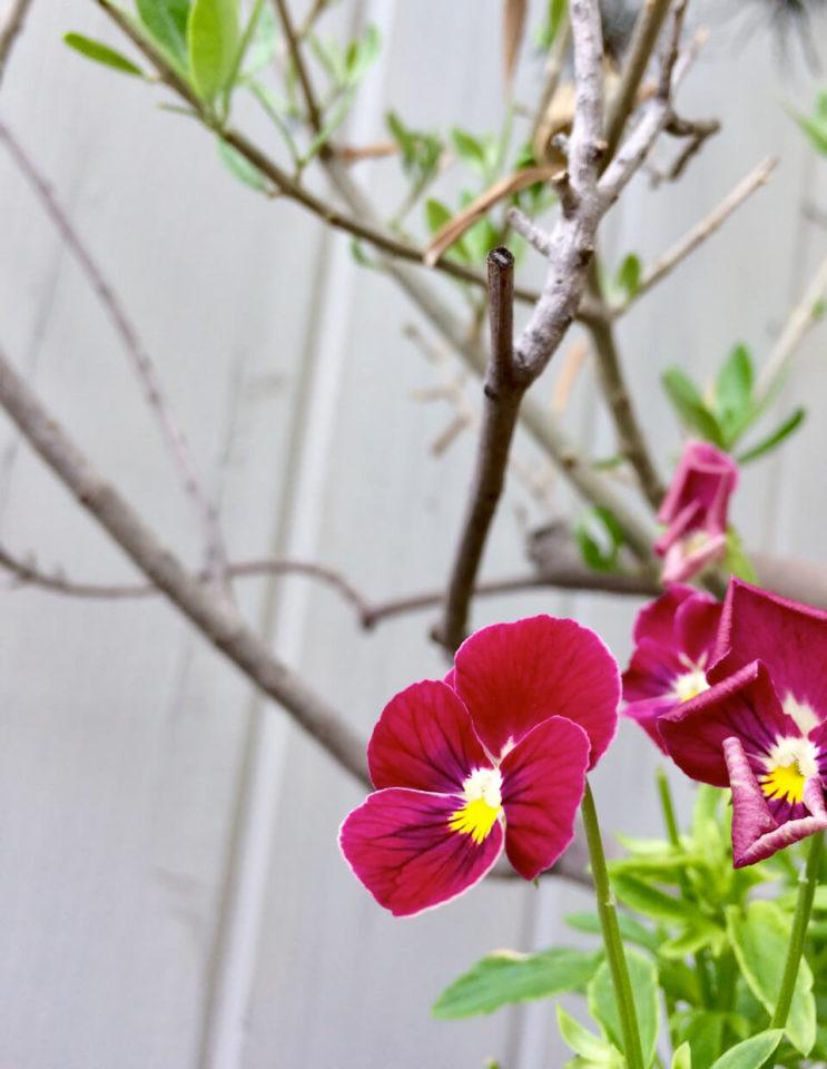 nidの花達12Jun 08 2019