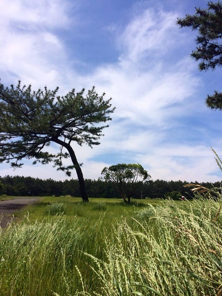 湘南海浜公園2014_5_27_1
