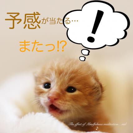 MFM予感が当たる子猫