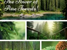エリカアンギャルさんより「松林の素晴らしいアロマ作用」の美しい森の映像