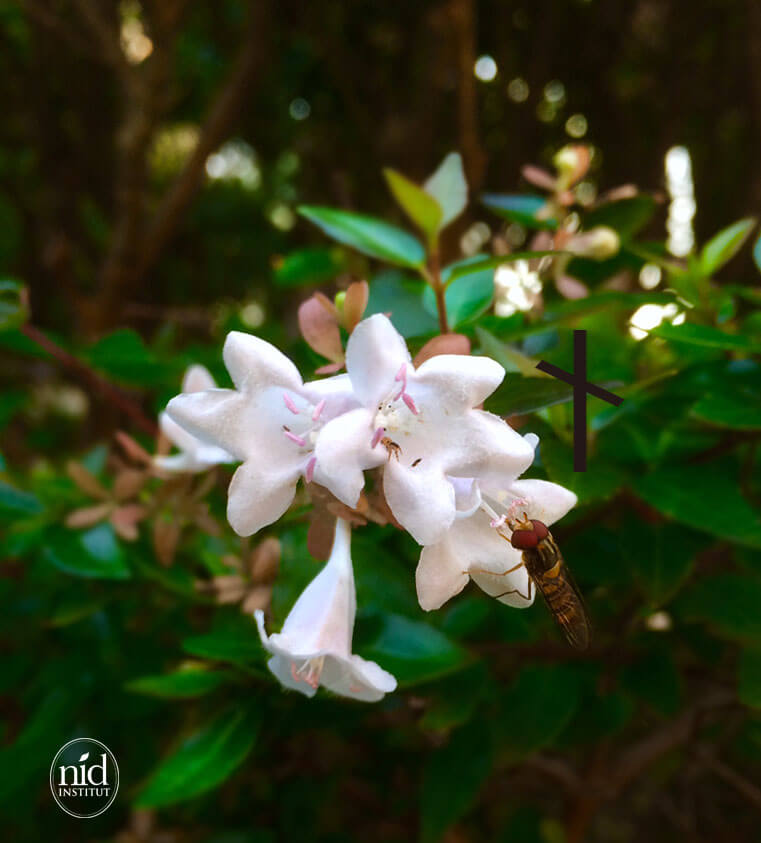 ニードと花とミツバチ