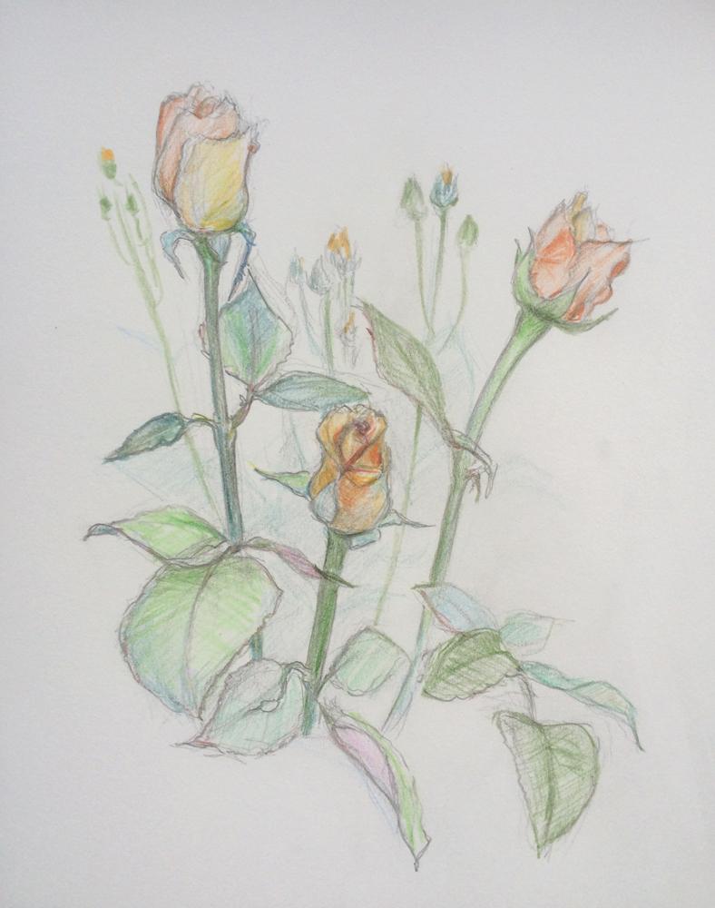 アートクラス2015薔薇オレンジw