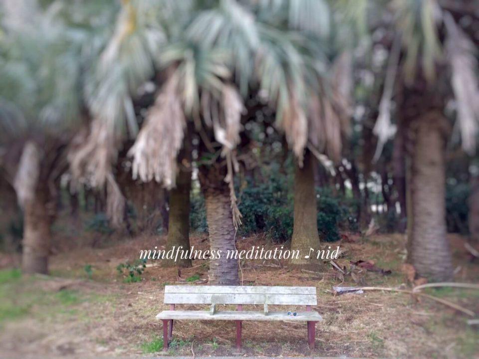 朝2019.3.10_公園ヤシのベンチ