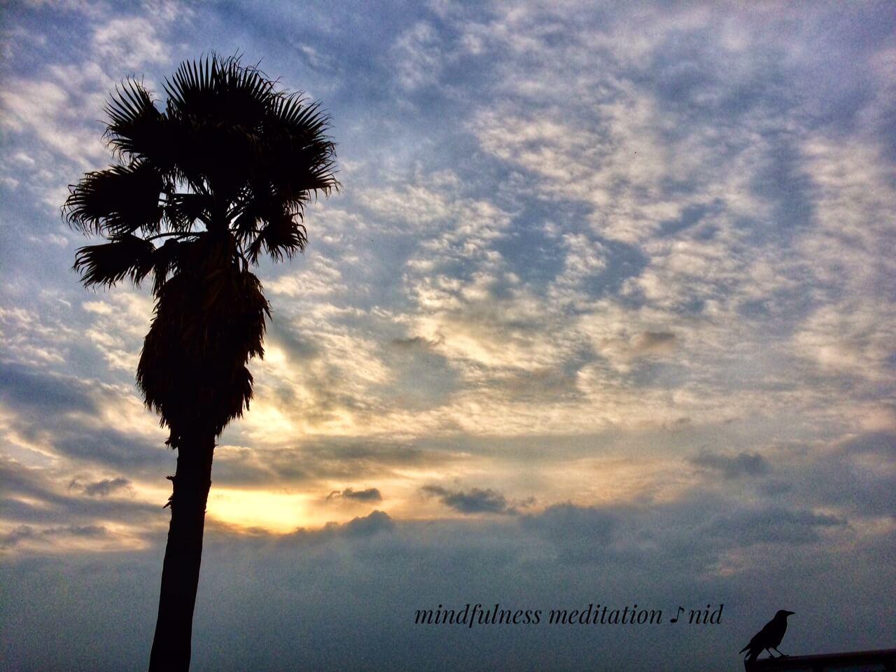 朝日2018.11.13_7:07カラスとヤシの木