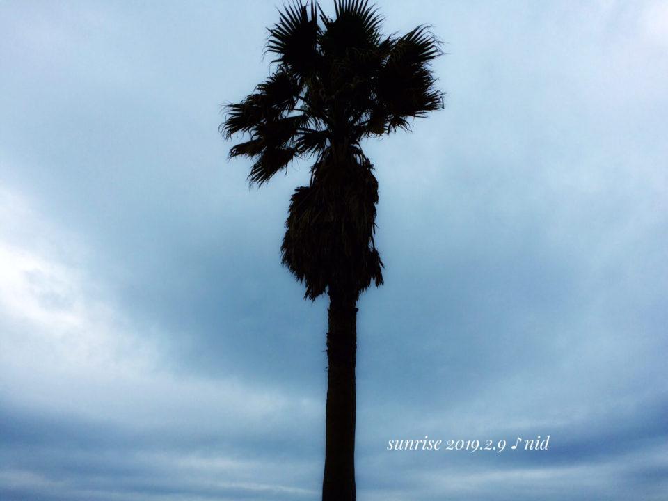 朝日2019.2.9_ヤシの木