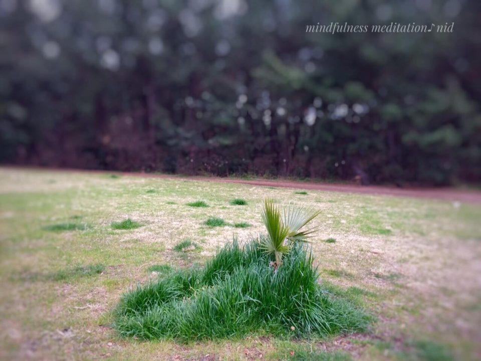 朝2019.3.21_公園の小さいヤシ