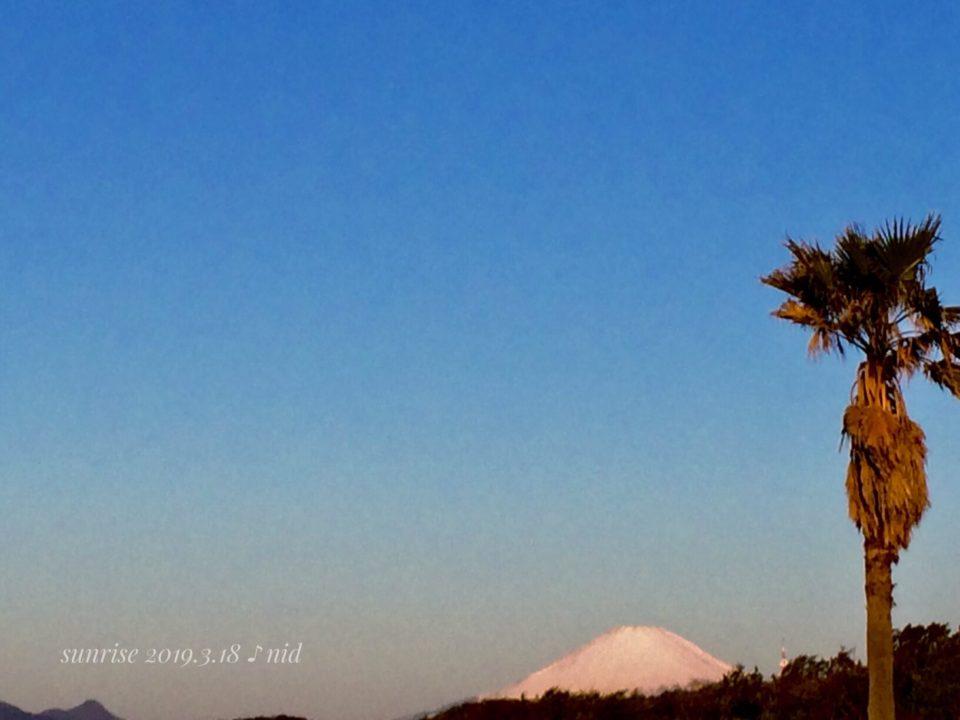 朝2019.3.18_ヤシと富士山
