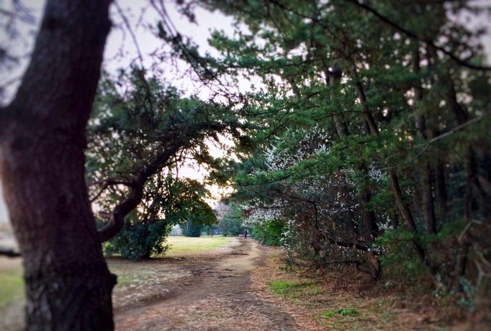 朝日2019.2.24_公園の道