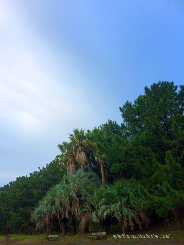 朝日2018.10.17_6:30公園のヤシの木