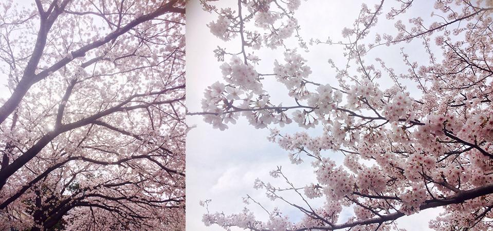 桜の季節、レイキセミナー開講しました