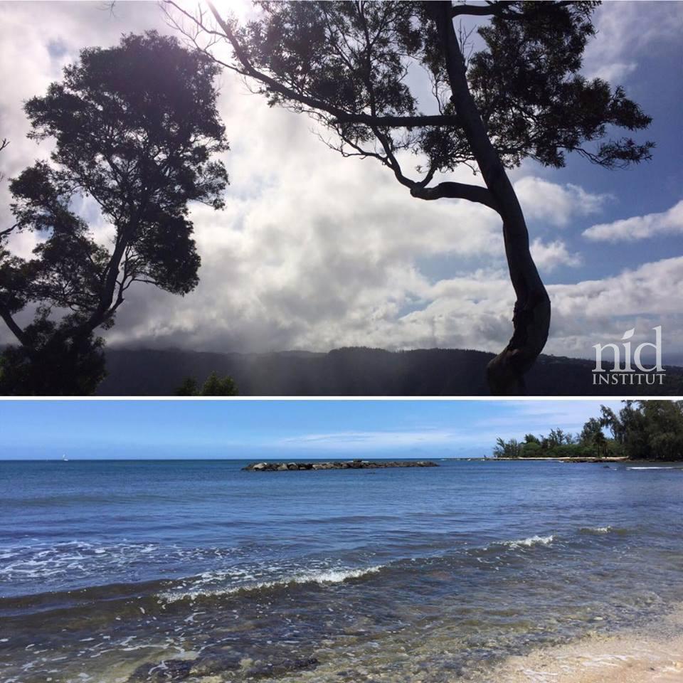 Hawaiiエナジーチャージ2016.8_ノースショアへ。