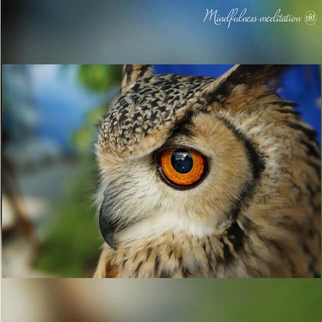 mfm_フクロウの目