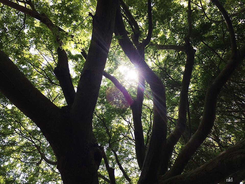 梅の木と光