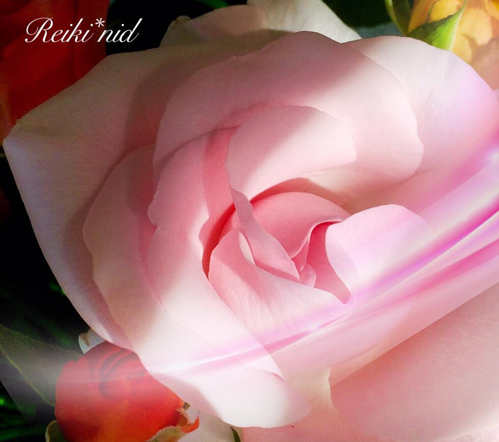 薔薇1_レイキ