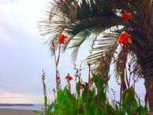 海散歩_ヤシと花