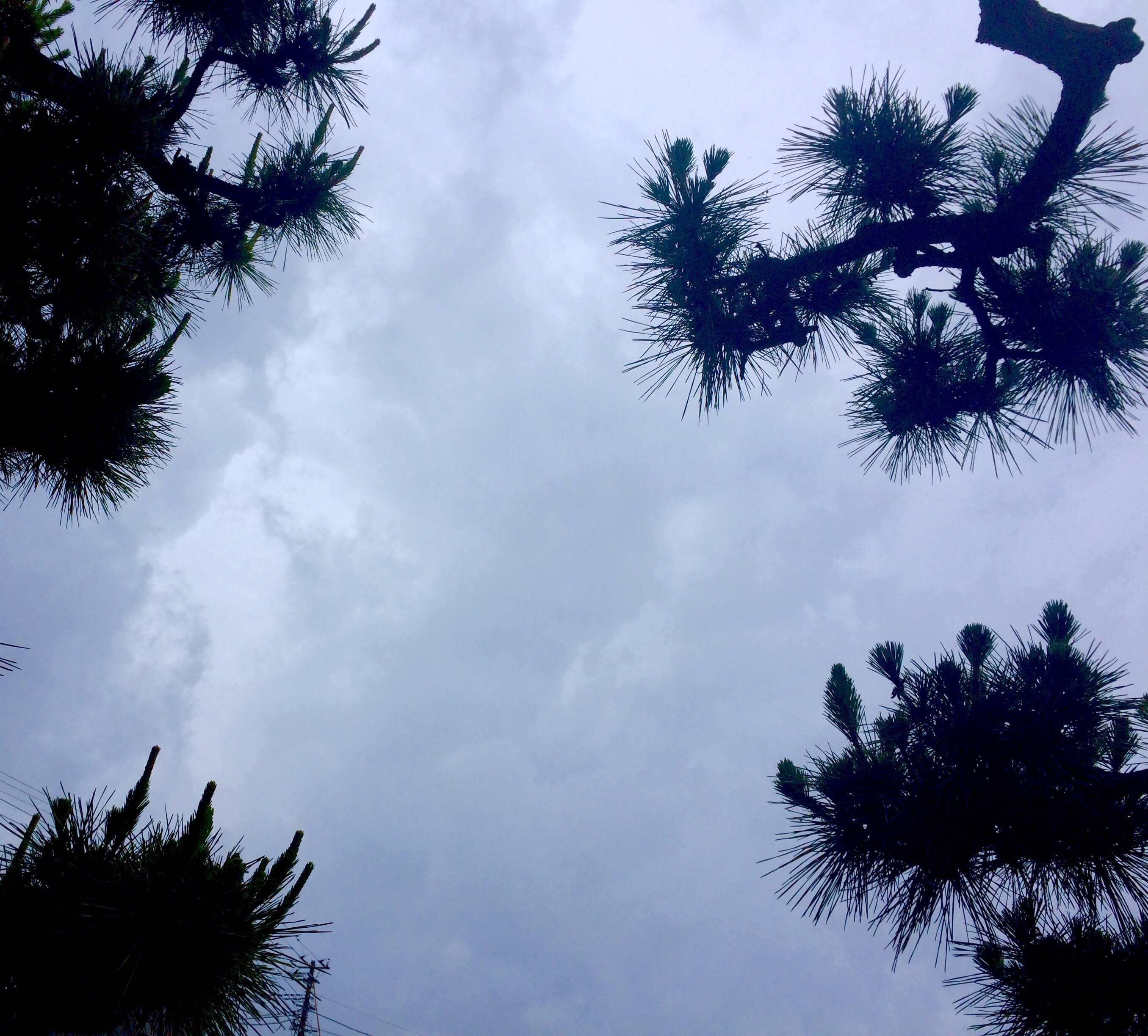 教会から見た松の空2017.6.21